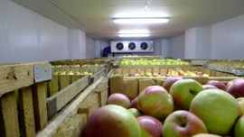 Быстровозводимое хранилище яблок