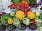 Межрегиональная агропромышленная выставка 2011